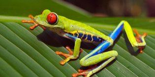 Famose Naturphänomene locken nach Costa Rica