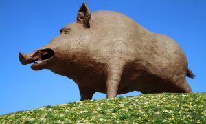 Riesenschweinerei in den Ardennen: Woinic, der Weltrekord-Keiler