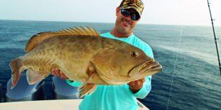 Floridas frischester Fang:Panama City Beach und seine illustren Meeresbewohner
