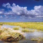 Nationalpark Schleswig-Holsteinisches Wattenmeer: Auf Streifzug in Neptuns Vorgarten