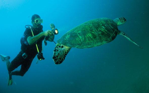 Begegnungen mit Wasserschildkröten oder Delfinen sind keine Seltenheit bei einem Tauchgang vor der Küste Omans.