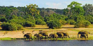 Botswana – die tierreiche Perle im südlichen Afrika