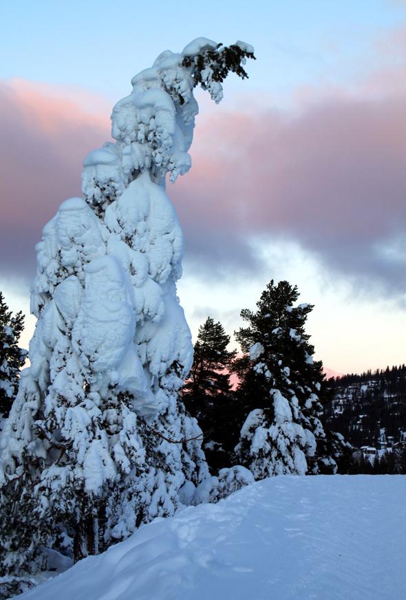 Nicht selten präsentiert sich der Winter in den Liechtensteiner Bergen von seiner schönsten Seite. (Foto Karsten-Thilo Raab)