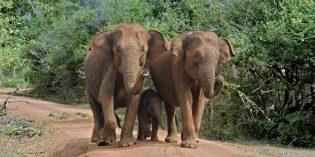 Tierisch was los in Sri Lankas Regenwäldern