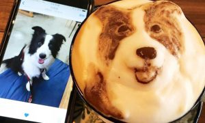 Taiwanesische Kaffee-Kunst in Vollendung