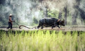 Johor – das Naturparadies in Malaysias Süden