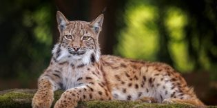 Bayerns kleinster Zoo: Wo die Wölfe heulen
