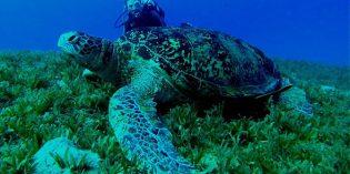 Meeresbiologisches Zentrum auf Kuredu eröffnet