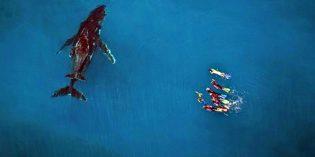 Schwimmen mit Buckelwalen am Ningaloo Reef
