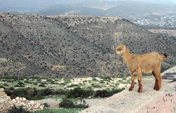 Herrliche Ausblicke bieten sich auch bei mäßigem Wetter von der Festungsanlage Kasbah. (Foto Karsten-Thilo Raab)