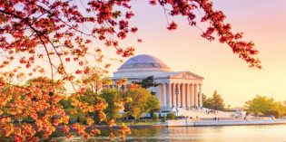 Blütenpracht in der Capital Region der USA