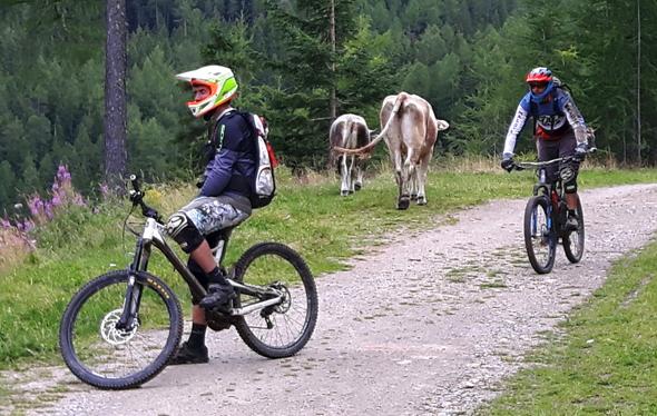 Auch tierische Begenungen sind in Sölden abseits der Trails an der Tagesordnung. (Foto Karsten-Thilo Raab)