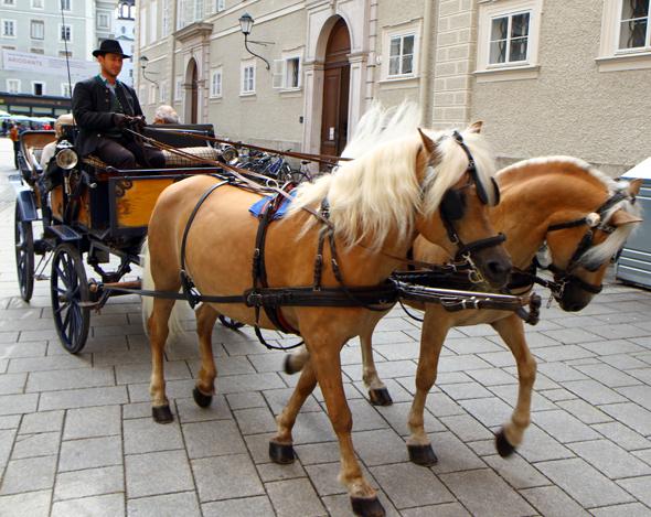 Kutschen gehören zum Stadtbild - heutzutage ollen diese jedoch nicht meghr durch die Pferdewaschanlage. (Foto Karsten-Thilo Raab)
