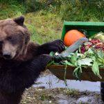 Alaska für Genießer: Rentier-Burger + Karibu-Steak