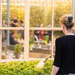 Neu in Island: Tomatenbier aus dem Gewächshaus