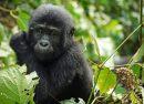 Kongo schließt den Virunga Park für Touristen