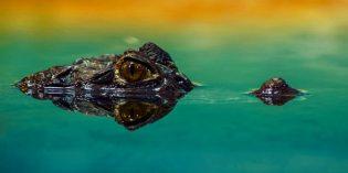 Nase an Schnauze mit Floridas Tierwelt