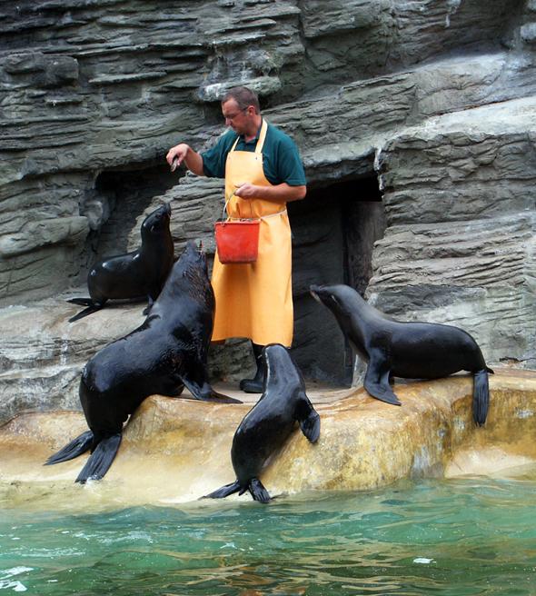 Hagenbecks Tierpark begeistert die Massen seit 1907. (Foto Karsten-Thilo Raab)