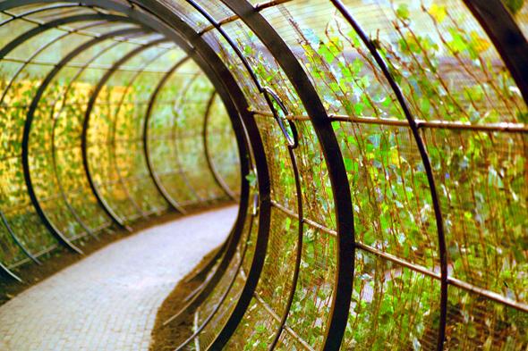 Der Giftgarten darf nur in begleitung eines Führers betreten werden. (Foto Karsten-Thilo Raab)