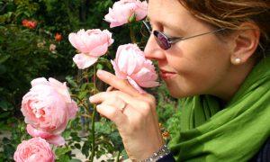 Alnwick Gardens – Englands tanzendes Wasser