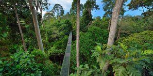 Malaysia – grün, grüner, Sabah!