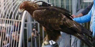 Abgehoben! Wien aus der Adlerperspektive