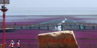 Faszination Red Beach – Chinas nördlichste Küste