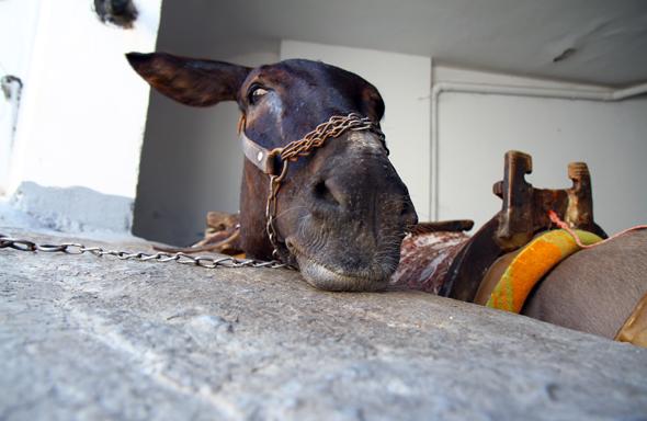 Wartet auf Kundschaft: ein Esel in der Altstadt von Lindos. - Foto Karsten-Thilo Raab