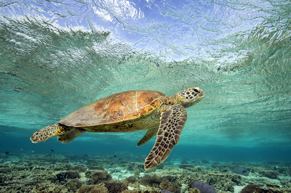 Schildkröten Australien