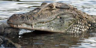 """""""Giganten"""" statt """"Big Five"""" – spektakuläre Tierwelt im Dschungel von Guyana"""