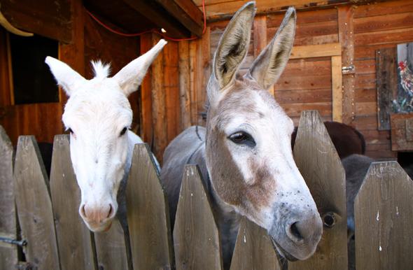 Pferd und Esel sind nur zwei Vertreter des hoteleigenen Mini-Zoos. - Foto Karsten-Thilo Raab