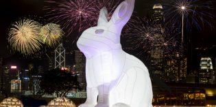 Riesige Hasen erleuchten das nächtliche Hongkong