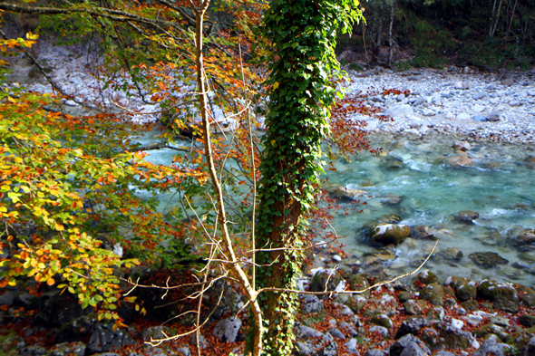 Gerade im Herbst begeistert die Tiefenbachklamm durch ihre Farbspiele. - Foto Karsten-Thilo Raab
