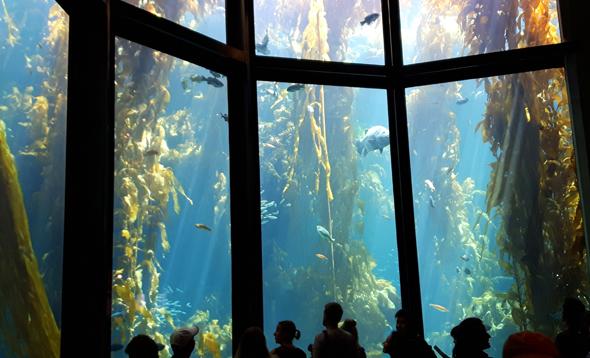 Durch riesige Scheiben wird ein Blick in eine famoses Unterwasserwelt ermöglicht. - Foto Karsten-Thilo Raab