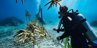 Nachhaltiger Meeresschutz auf den Fidschi-Inseln
