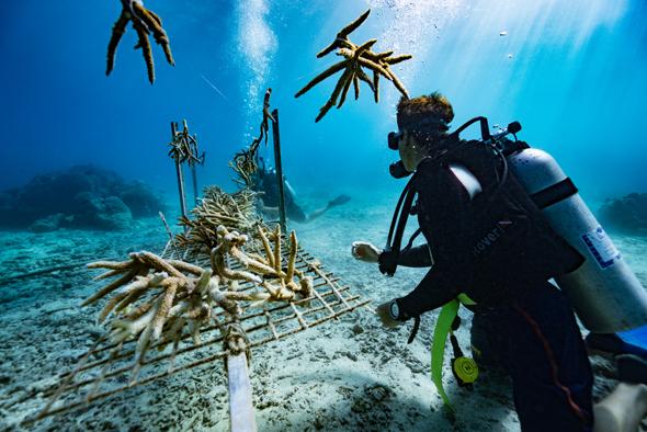 Nachhaltiger Meeresschutz Auf Den Fidschi Inseln Mortimer