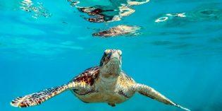 Barbados – Karibik-Zauber für Sonnenhungrige