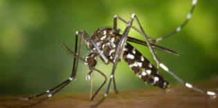 Sri Lanka – wichtiger Schutz vor Dengue-Fieber