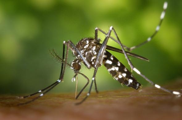 sri lanka dengue fieber