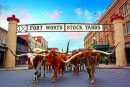Herd that? Fort Worth feiert 20 Jahre Cattle Drive
