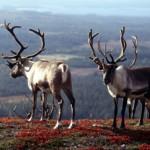 Lappland – die letzte Wildnis Europas
