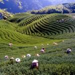 Taiwans landschaftliche Vielfalt