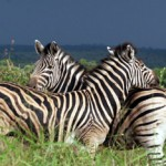 Rangertrainings in Südafrika