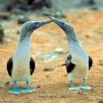 Ecuador limitiert Besucherströme auf die Galapagos