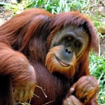 Kalimantan – die Zweidrittelinsel