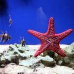 The Deep: Mit dem Fahrstuhl durchs Aquarium