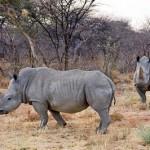 Ruma Nationalpark wird Rhino-Schutzgebiet