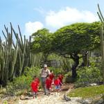 Aruba: Divi-Divis, Kakteen und Leguane