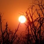 Botswana – in den Wasserstraßen der Wüste