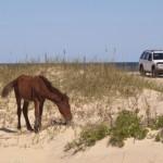 Wilde Mustangs als Symbol der Freiheit